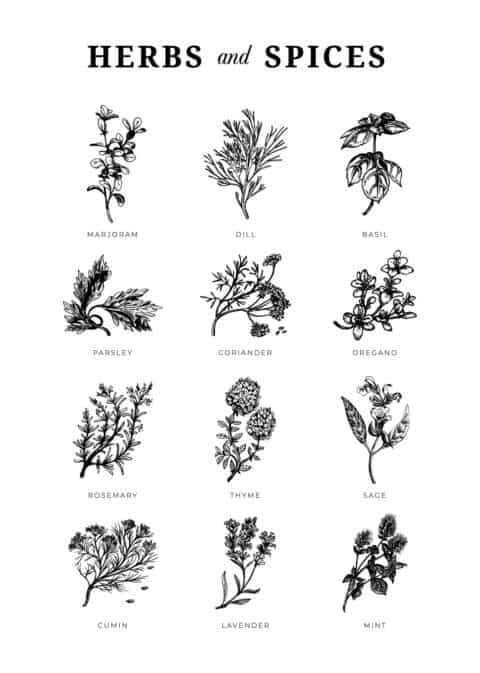 Herbs & Spices Illustration Poster